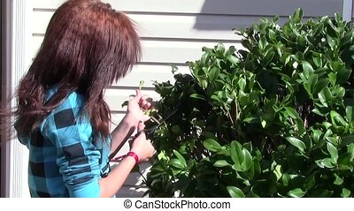 Pruning Bushes - Teen pruning hedges