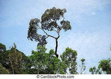 arbre , flore , vgetal - trs grand arbre