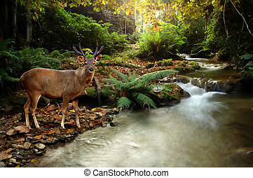 sambar deer and tropical stream