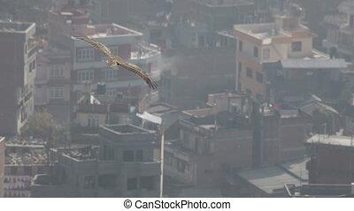 Kite. Flight.