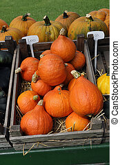 Orange Pumpkins in wooden box for sale