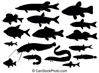 Fish - vector images of fish collection