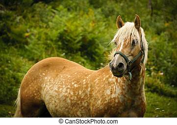 Brown horse in a pasture - A brown horse in a pasture in the...