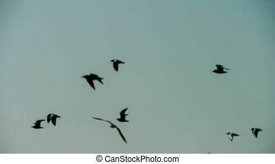 Silhouette of flock birds flying.