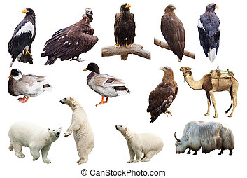 Set of animals Isolated over white background