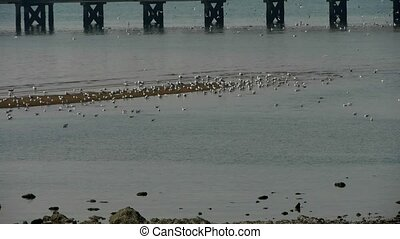 seagull habitat at beach,trestle bridge