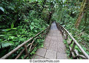 Trail through rainforest - Trail through a lowland tropical...