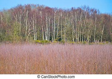 Heathland with trees