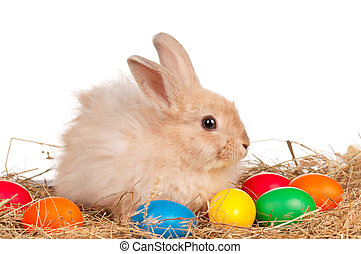 Rabbit with Easter eggs - Adorable rabbit and Easter eggs on...