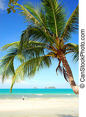 coconut palm tree on the beach nice blue sky