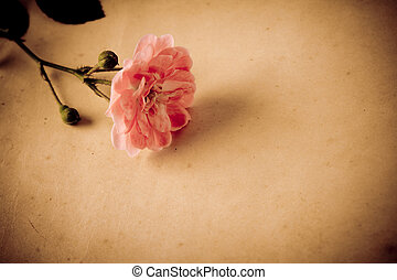 Empty grunge paper with rose