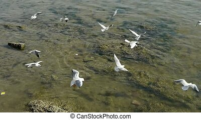 Many seagull flying in sea,reef,Seaside dams of QingDao city...