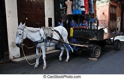 Saddled Donkey - A donkeys at the steet of Marrakech,...