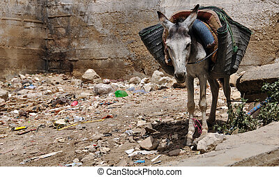 Saddled Donkey - A donkeys at the steet of Fez, Morocco