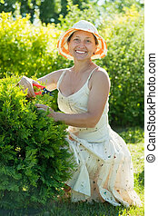 Mature woman cutting thuja at garden