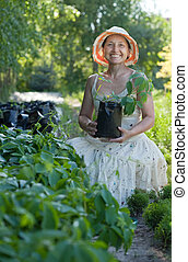 gardener with Parthenocissus tricuspidata sprouts - Female...