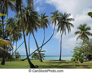 Crooked palm tree - A Crooked palm tree on the ocean front...
