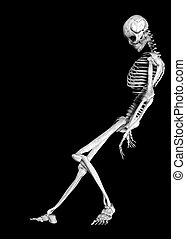 Skeleton - Illustration of a skeleton isolated on a black...
