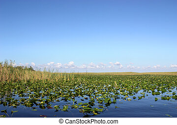 Everglades Florida - Beautiful scenery of lake in...