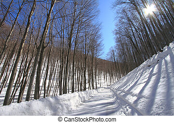 Wintry forest - Wintry forest