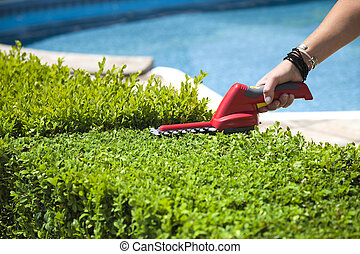 Hedge trimmer - The person cuts the hedge by the Hedge...