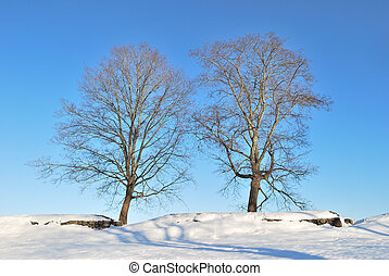 Two beautiful trees before sunset in early spring