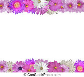 Border of Spring and Summer Flowers - Cheerful border of...