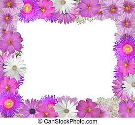 Flower Frame - Pretty frame or border of pink and white...