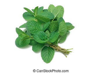 Herb Series Common Mint - Common Mint (herb) tied in a bunch...