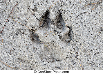 Dog footprints on wet sand close up