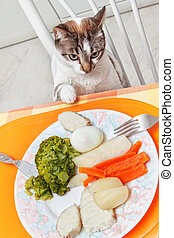 the cat at the table with food.