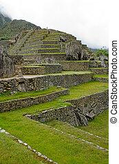 Machu Picchu, Peru - Agricultural terraces at Machu Picchu,...