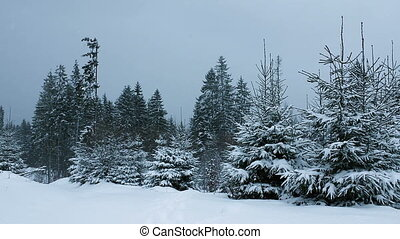 Snow Falling in Forest Full HD