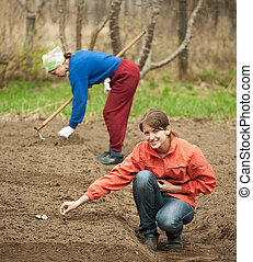 women checkrows set onion - Two women checkrows set onion in...