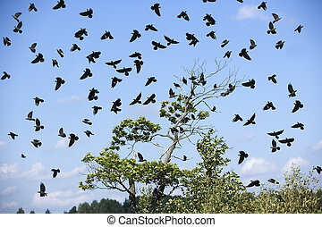 Birds - Large group of birds in the sky