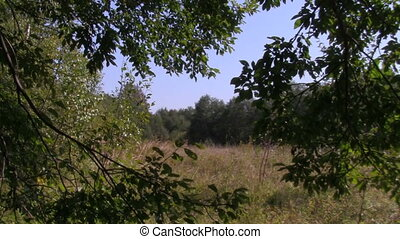 forest glade - forest clearing, the view from the forest
