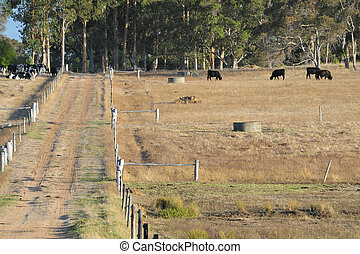 rural subdivision - dry hillside subdivided by fences and...