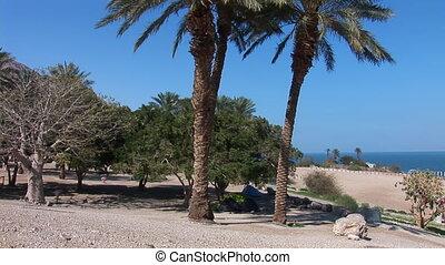 palms 1 - twin palms near Dead Sea