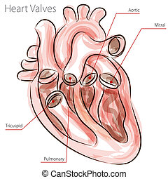 Heart Valves Watercolor Chart - An image of a heart valves...
