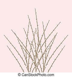 wiosna, wierzba, gałązka