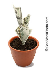 Money plant - Business concept image: money growth in...
