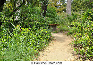 Nature Path with Bench in Background