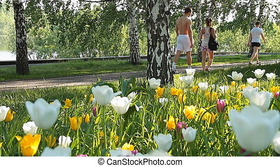 City flowers 002 - City landscape with flowers