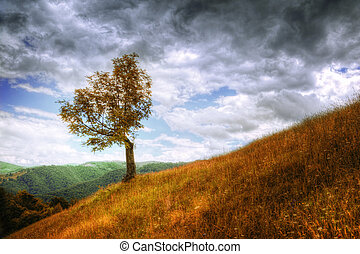 Mountain landscape - isolated tree and autumn grass -...