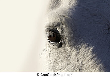 Beautiful white horse with deep gaze