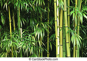 Green bamboo forest - A thick green bamboo forest.