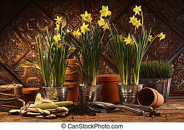Close-up of potted daffodils in potting shed