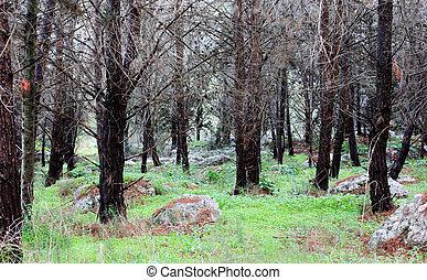 primavera, bosque