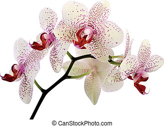beautiful orchid flowers on a white background