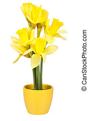 Easter decoration with daffodils in the flower pot